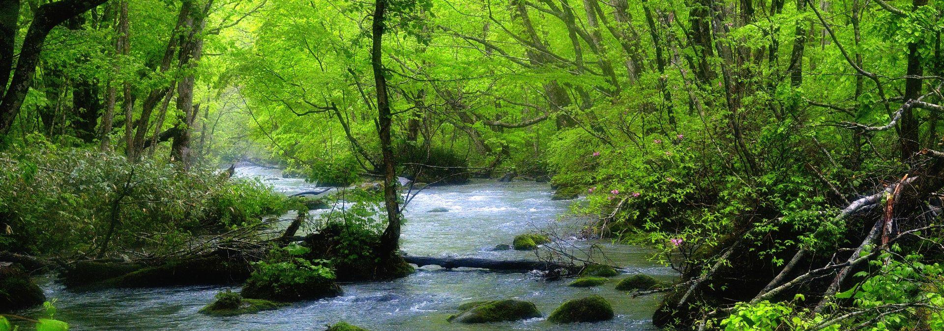 奥入瀬渓流の朝