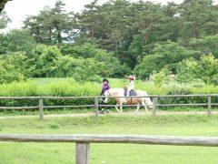 広大な農場で心癒される♪  小岩井農場サクッと観光コース
